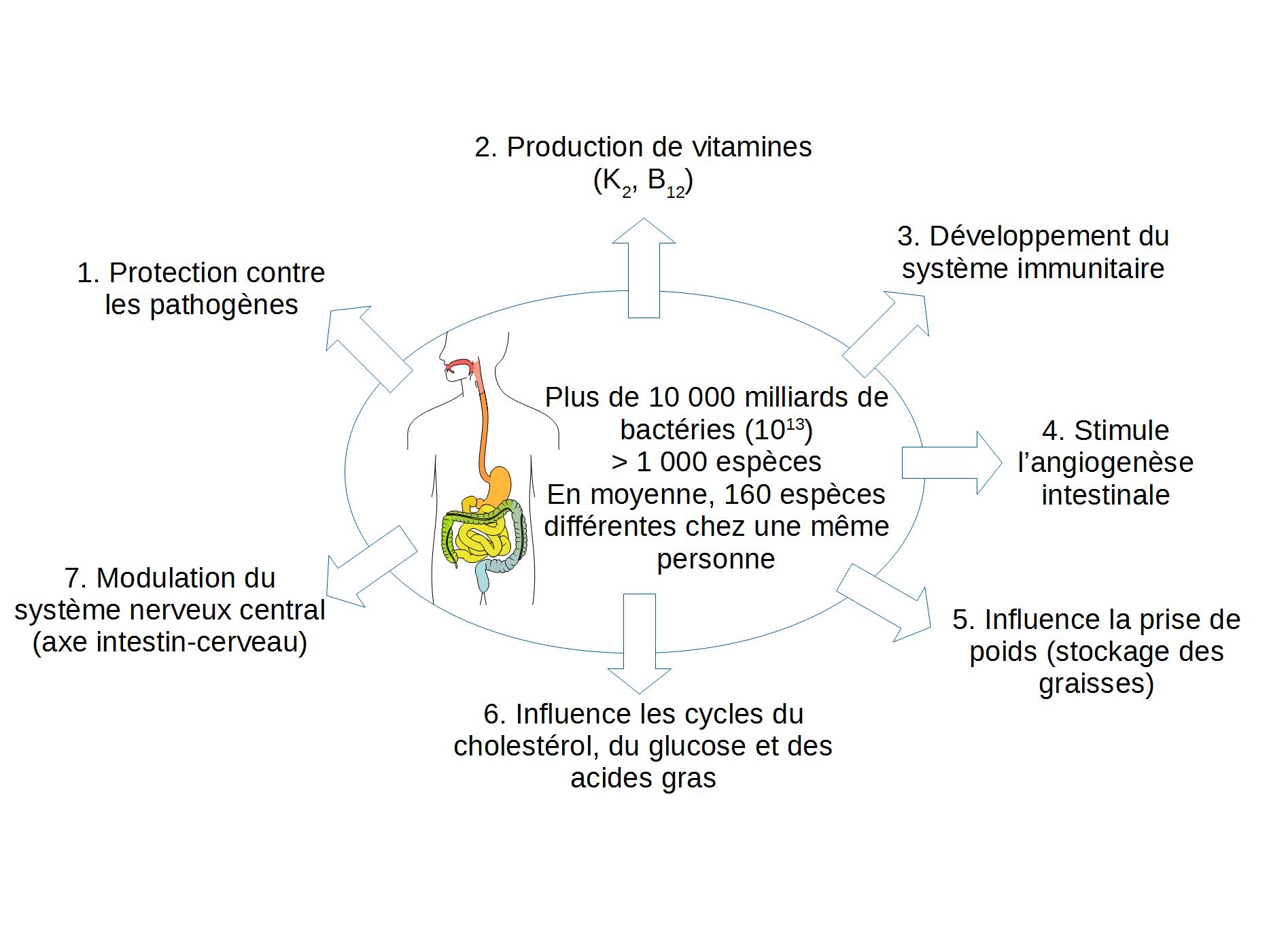 Rôles du microbiote intestinal